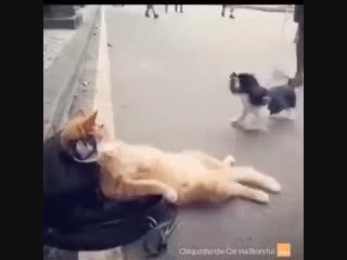 Да ты успокойся браток
