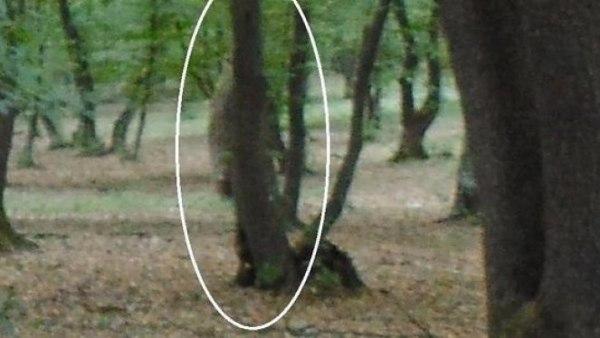 Бермудский треугольник Трансильвании. Лес Хойя-Бачу, расположенный неподалеку от румынского города Клуж-Напока, по праву носит звание одного из самых таинственных мест Европы. Его называют