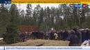 Новости на Россия 24 • Мединский призвал искать общее в истории Польши и России