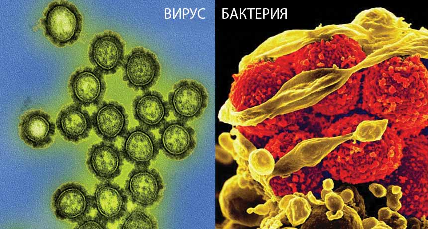 В чем разница между бактериальными и вирусными инфекциями