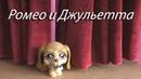 LPS театр 2 сезон спектакль №6 Ромео и Джульетта
