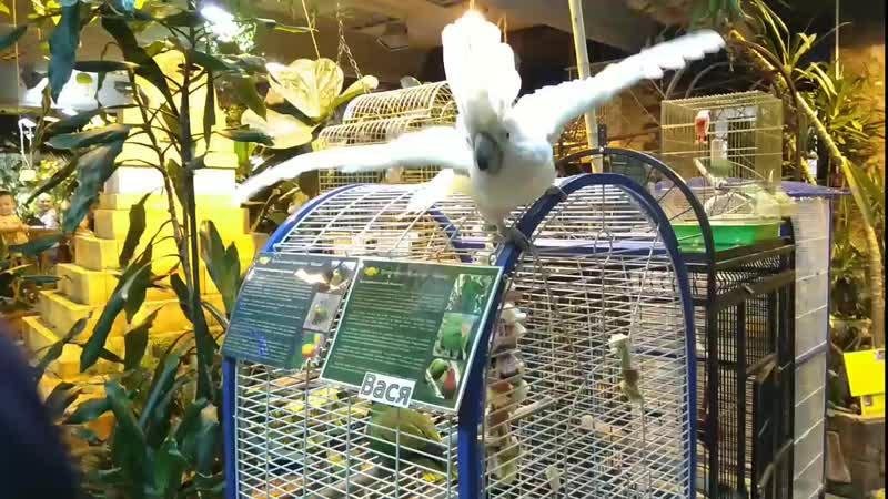 Миндо. Попугай проголодался