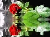 Поздравление с Днем Рождения-нежная песн...ивые розы (480p).mp4
