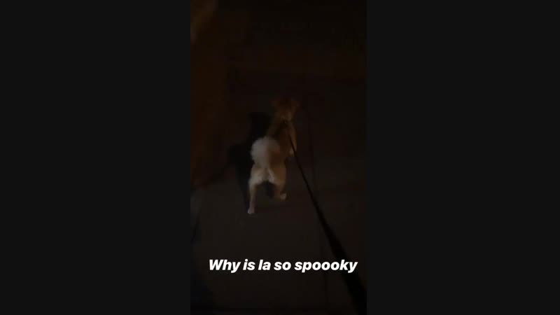 Why is la so spooky Looks like a curled tail, maybe Pharaoh. andrewrmaher igs posted 10/28