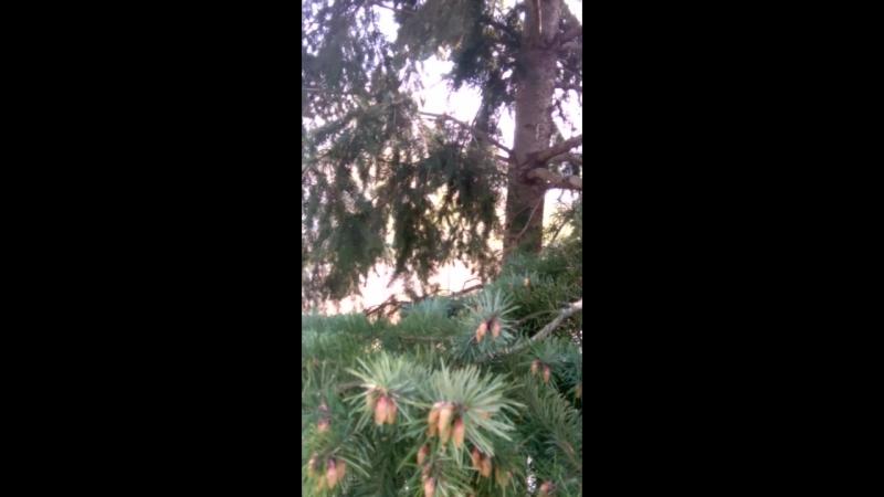 Пражский зоопарк. Размножение елей.