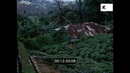 Tea Farm in 1970s Sri Lanka, 16mm