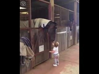 Девочка очень любит лошадей