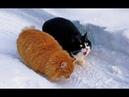 Смешные животные до слез видео с котами приколы с кошками 2018 16 Улетно и забавно