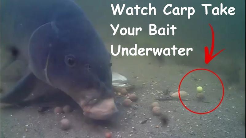 Underwater Carp Fishing Compilation 2019