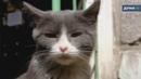 Котоспас Репортаж о подвальных кошках с Анной Фельдман