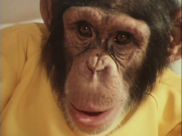 Украли зебру 1972 Детский фильм Золотая коллекция
