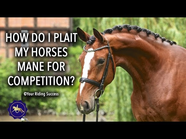 How Do I Plait My Horses Mane For Competition - Competition Mastery TV Ep4