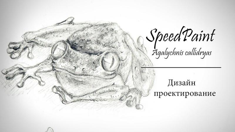 SpeedPaint | Красноглазая квакша |РАЗГОВОРНЫЙ ВИДОС