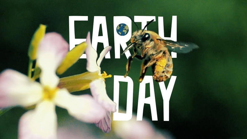 EARTHDAY Why are bees disappearing @yakfilms x @bathsmusic featuring Anthophila Pollinisation