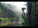 Nat Geo Wild Человек и природа. Леса 1080p