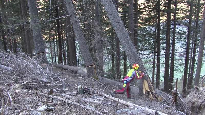 Bäume fällen V Schnitt und Hänger