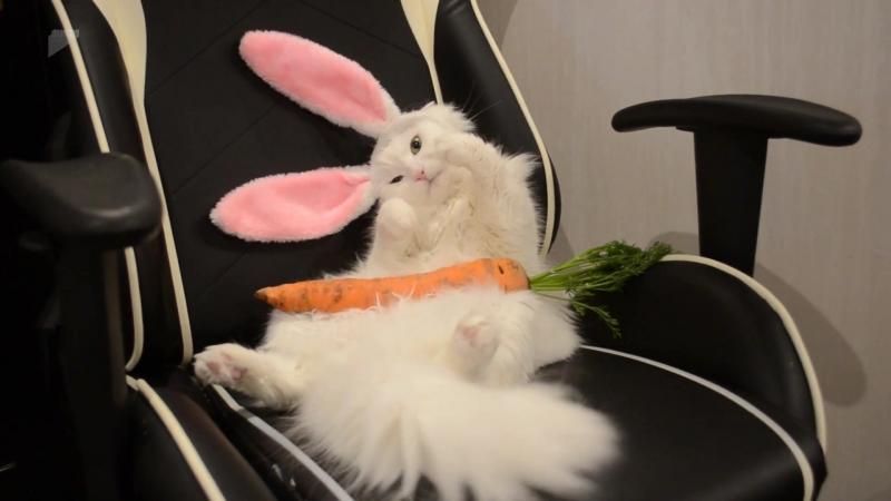 Cat Wears Bunny Ears