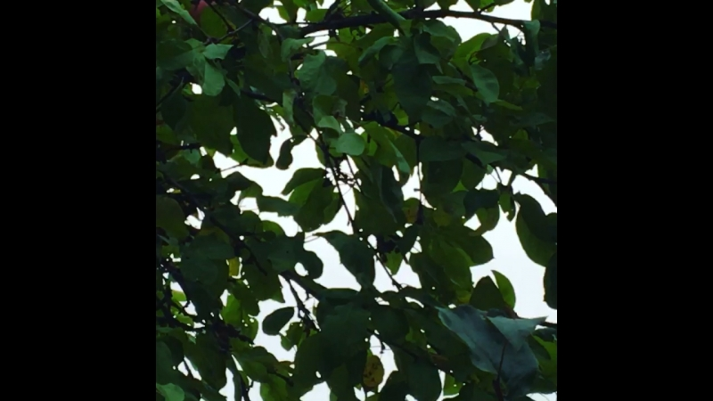 Фейковые яблоки в саду