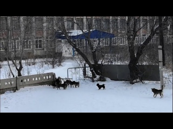 Бродячие собаки в городе Славгород Алтайский край