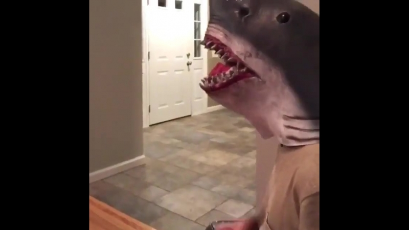 Из жизни акулы