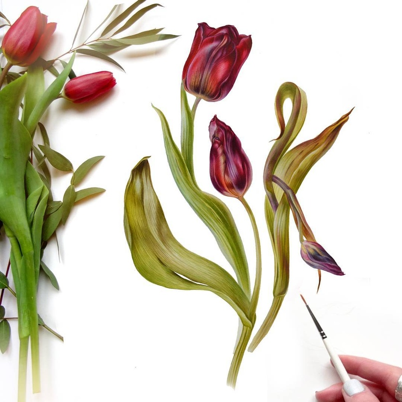 ботаническая иллюстрация, художественные курсы в спб, ботанический рисунок