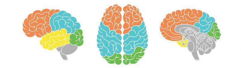 Как работает 5-HTP в мозге