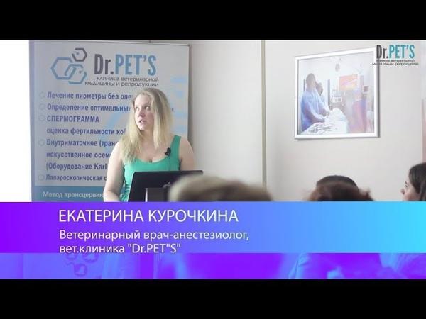 Анестезия при кесаревом сечении. Курочкина Е.Д. - анестезиолог Dr.Pet's