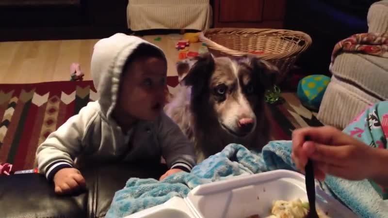 Мать хотела научить своего ребенка говорить слово мама но собака за вкусняшку эт