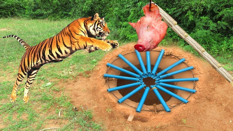 Primitive Technology Tiger Trap By Technology PVC DIY Trap And Rescue Tiger Back to The Wild
