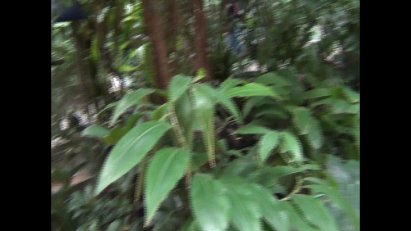 Зоопарк Лимпопо Амазония