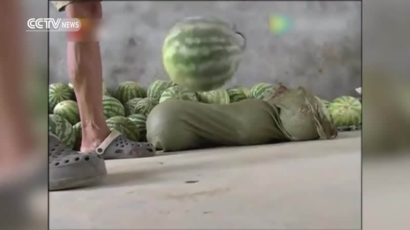 Fruit or football Bouncy watermelons 'spring' in China