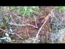 [Senya Miro] vlog Остров Это Бабушка, я люблю Бабушку. день 5 - Senya Miro