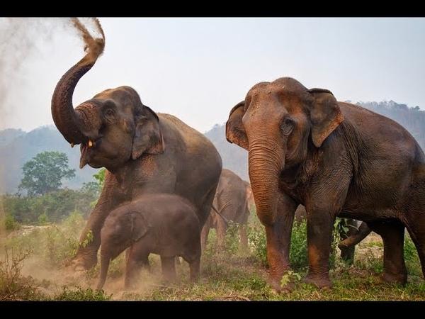 Невероятная дружба слонов и человека