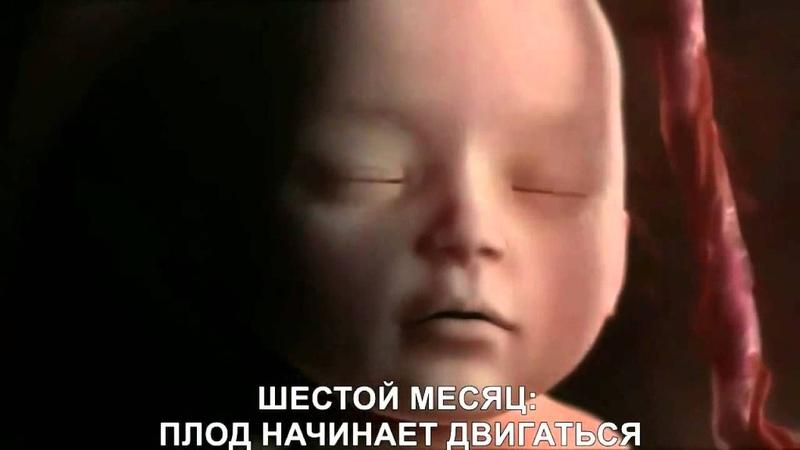 САМСАРА (КРУГОВОРОТ РОЖДЕНИЯ И СМЕРТИ)
