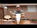 HOW TO CLEAN A COW SKULL GRAPHIC