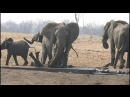 An elephant mother does not give up and saves her baby