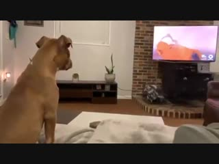 I never had any reaction to this scene, and look at this dog ... I'm clearly alien.