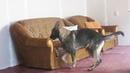 Веселая собачья карусель