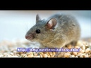 EXPERT RAT AND MICE EXTERMINATION CONTROL SERVICES