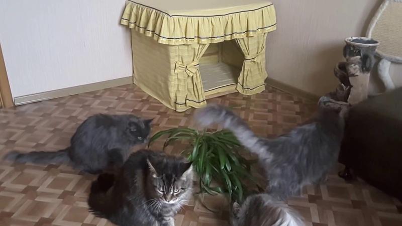 Кошки что вытворяют, и, цветок догрызают, и лапкой из узкой банки