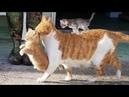Смешные животные коты собаки и другие приколы с животными НЕУДАЧИ ЖИВОТНЫХ 2019