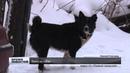 Нижегородских владельцев собак предупреждают об атаке догхантеров