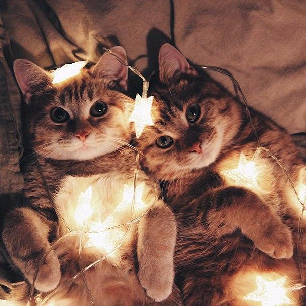 Эти два рыжих котёнка, найденных в парке, неразлучны с первого дня