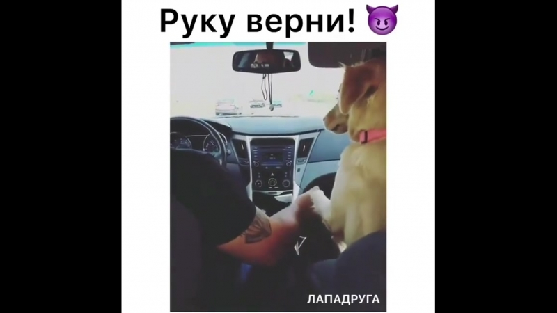 Moy_pitomec.sidBmevvC_AYSf.mp4