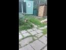 Маленький, глупый лисёнок 🦊.mp4