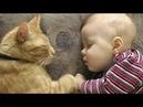 Gatti Pazzi e Bambini - Funny Cats and Babies - Prova a non ridere