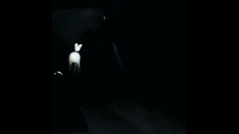 Полицейские преследуют зайца
