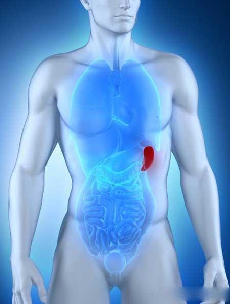 Селезенка - это один орган, где может быть обнаружена кислая фосфатаза.
