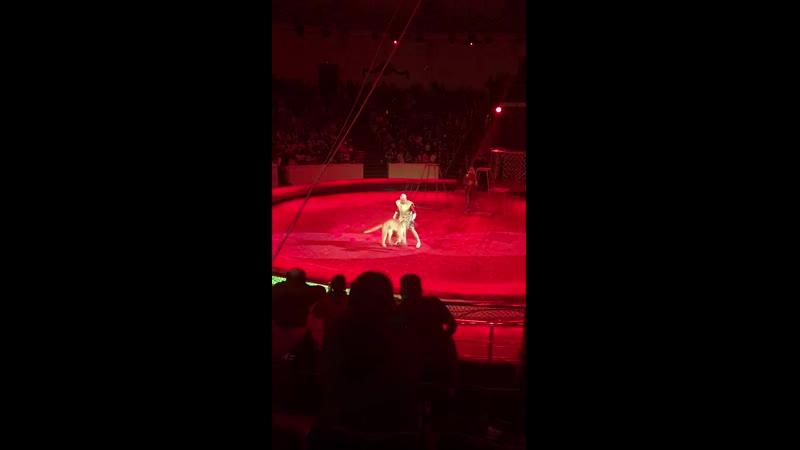 Алека в цирке 2019г 6