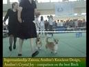 All Bred International Dog Show White Night-2007 (corgi)